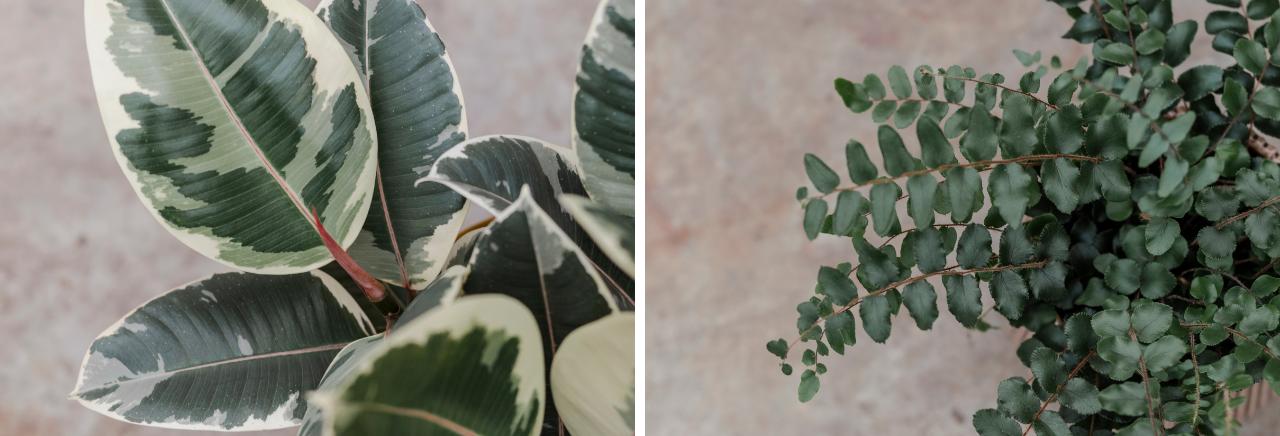 Bloemenhuis Kamerplanten