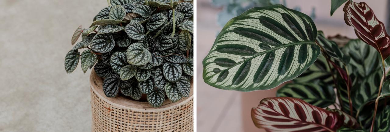 Groene kamerplanten - Bloemenhuis