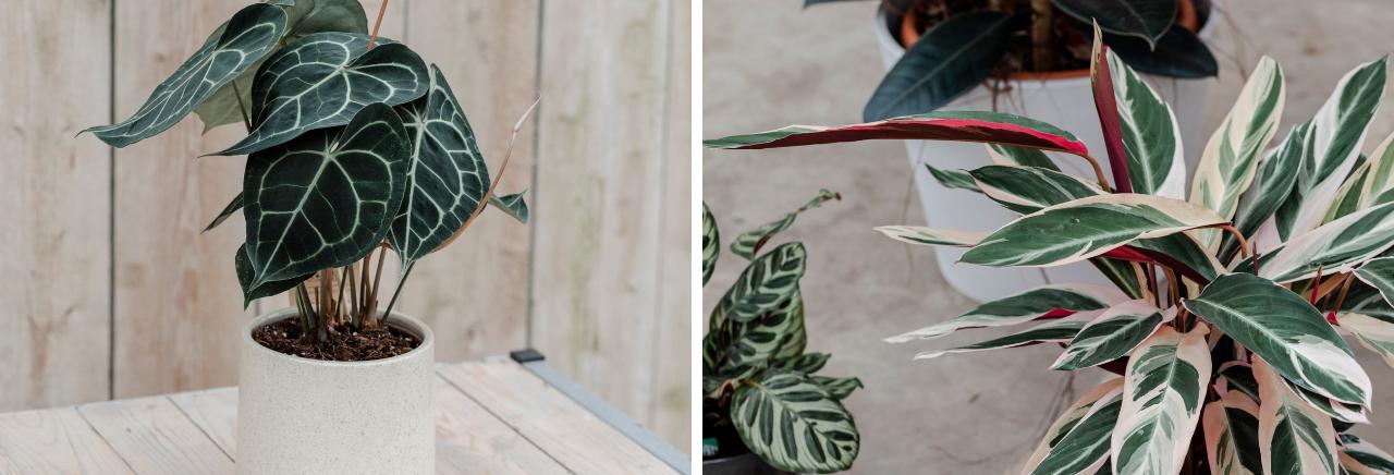Groene kamerplanten- Bloemenhuis