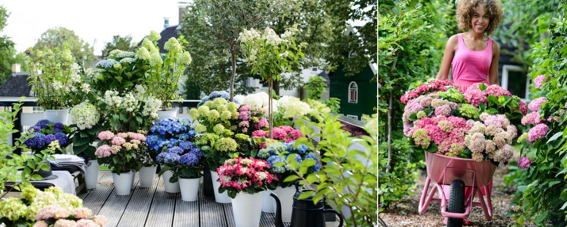 Tuinplanten_Bloemenhuis