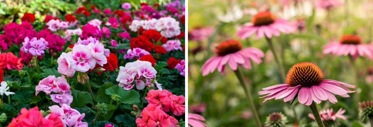 Vaste planten Bloemenhuis