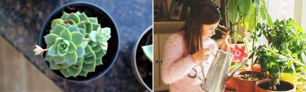 Verzorgen cactus en vetplant - Bloemenhuis